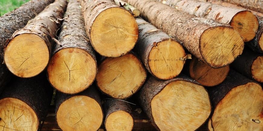 Mit dem RapidoScan ins Holz